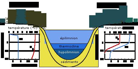 Stratification au sein d'un plan d'eau