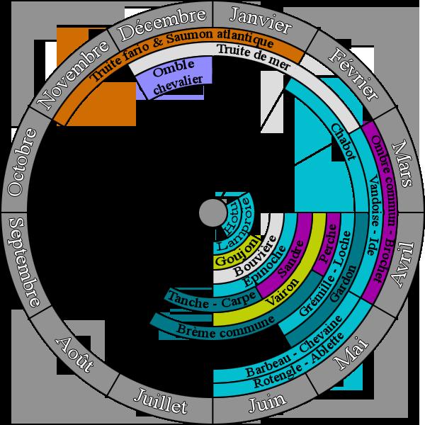 Période de frai des différentes espèces de poissons
