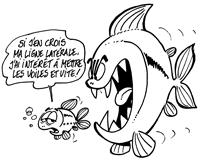 Les six sens chez les poissons : la variation de pression