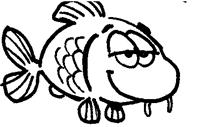 Les six sens chez les poissons : le toucher