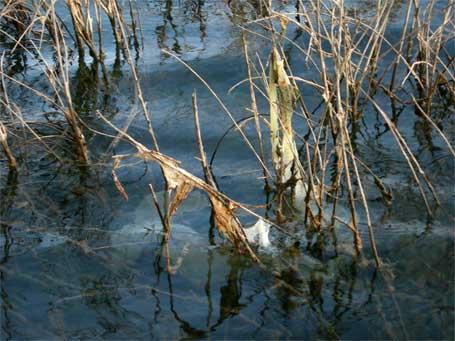 Ponte de perche dans le Lac de la Plate Taille