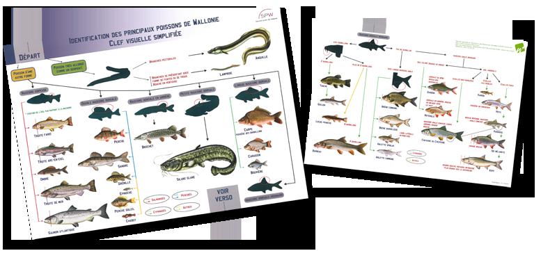 Clef visuelle simplifiée d'identification des principales espèces de poissons