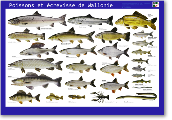 Bâche Poissons et écrevisse de Wallonie