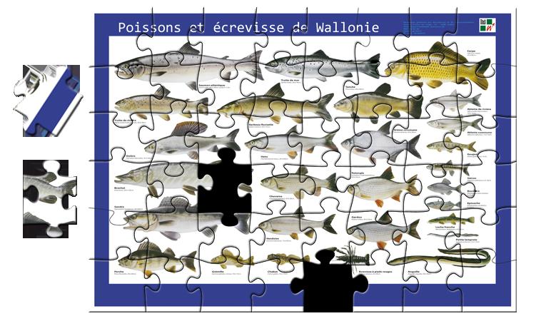 Puzzle des poissons et écrevisse de Wallonie
